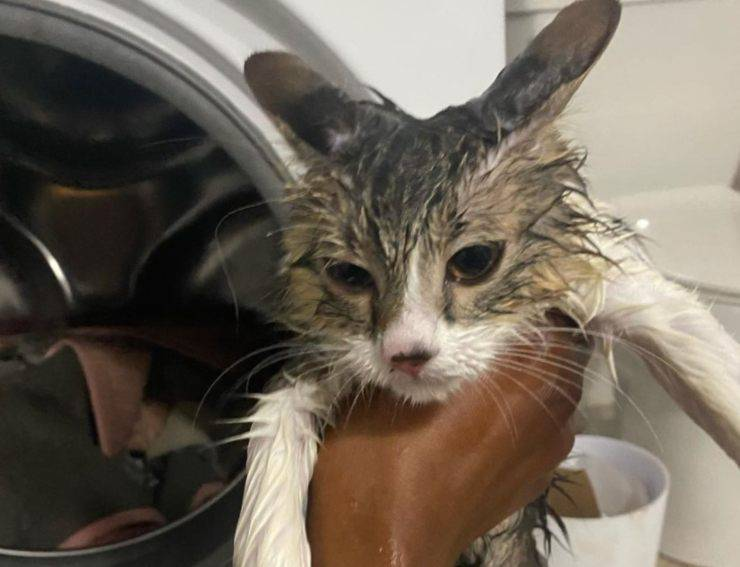 gatto lavatrice accesa salvo