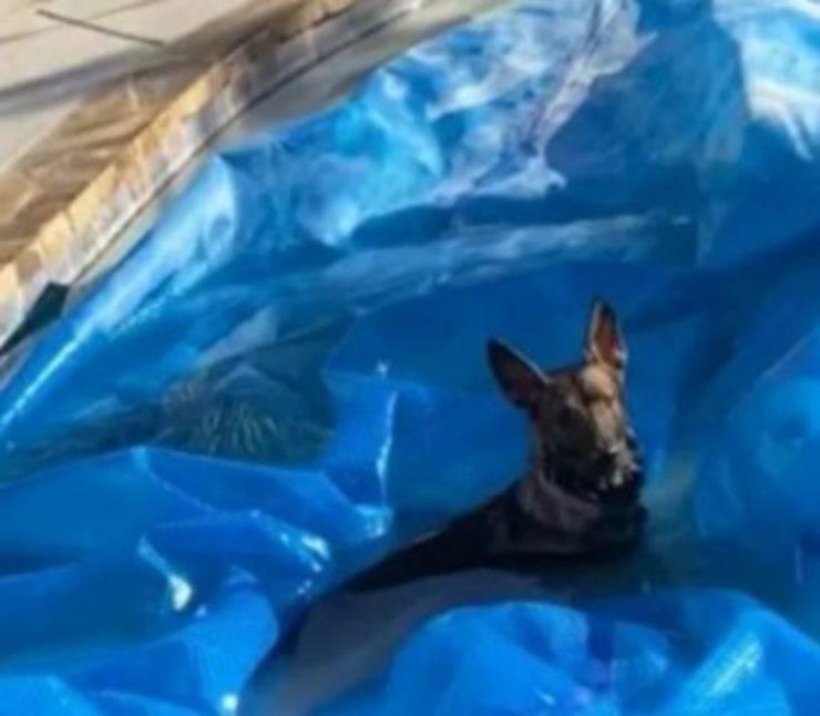 cane evade lockdwon tuffo piscina