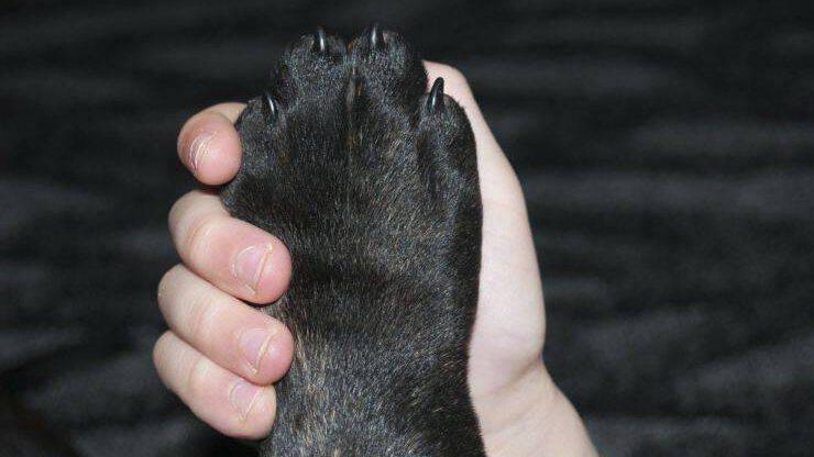 Razze di cani con le zampe più forti