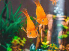 luce pesci acquario