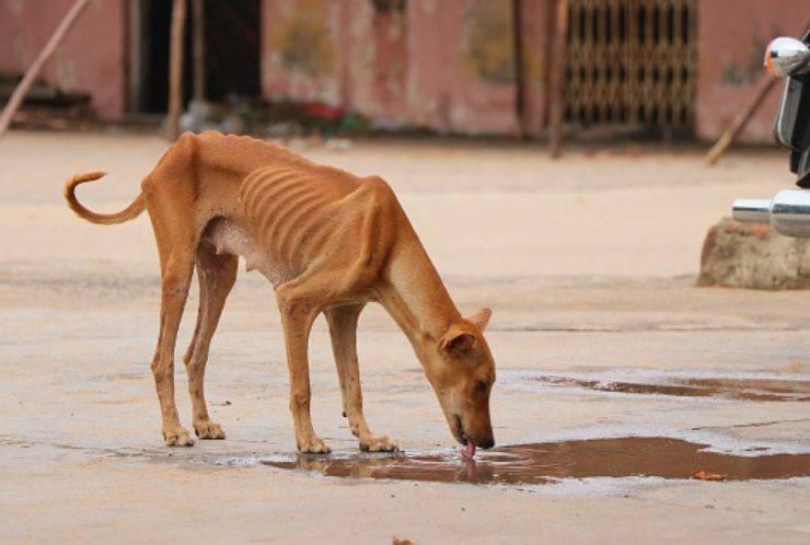 cane abbandonato paggetto