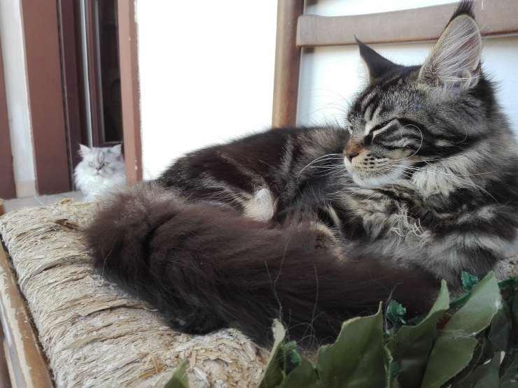 Mamma gatta e cuccioli