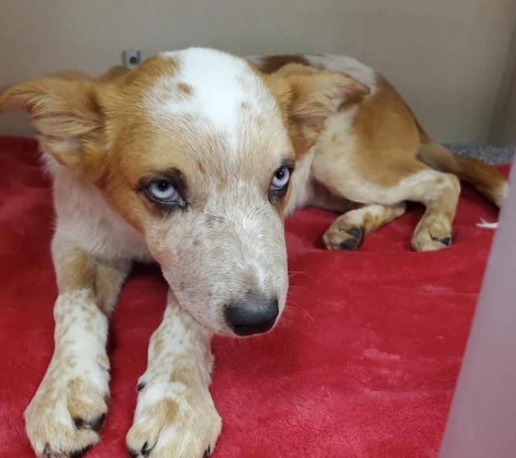 cucciolo cane maltrattato fiume