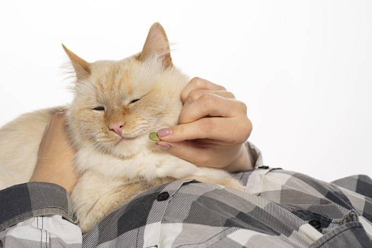 gatto e mangiapillola