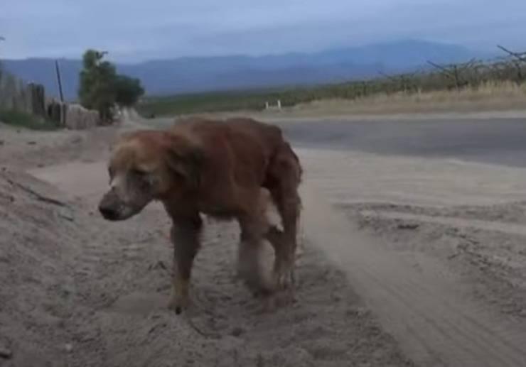 cane abbandonato confine