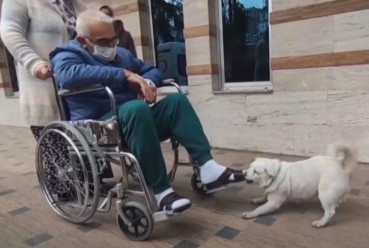 cane aspetta proprietario ospedale 7 giorni
