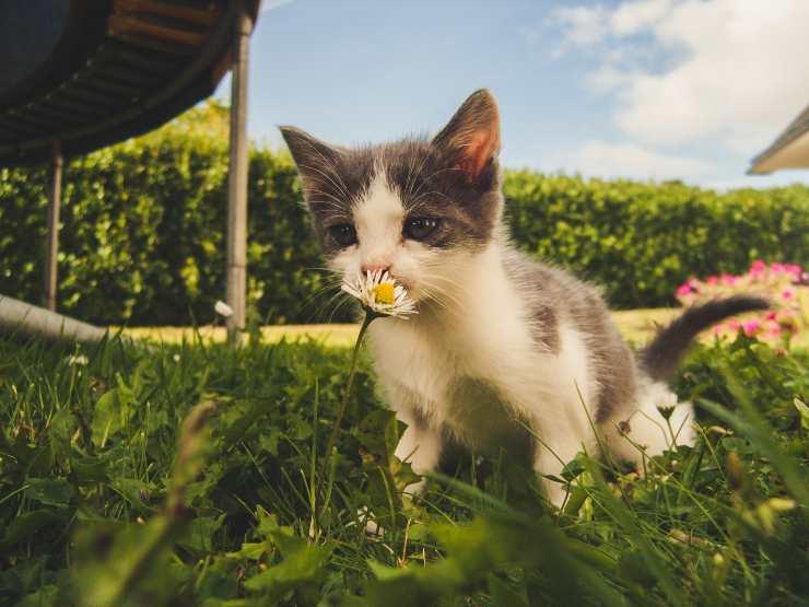 Il gatto visita le case altrui