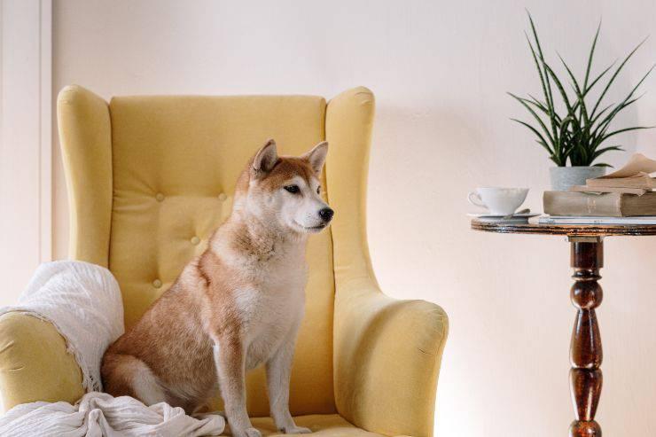 Le piante non tossiche per il cane
