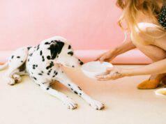 La spezia per il cane