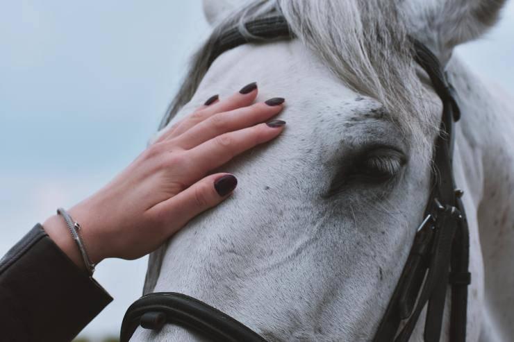Il cavallo e i suoi sintomi