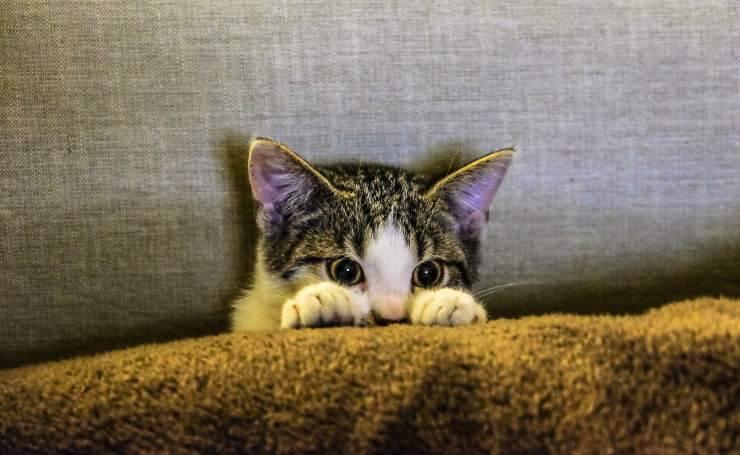 Gattino sottopeso