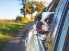 Il cane e il mal d'auto