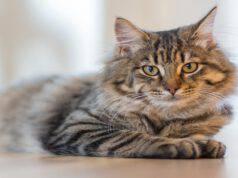 Il gatto e i suoi superpoteri