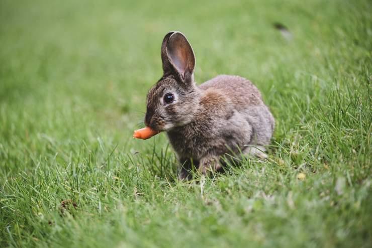 Il cibo per il coniglio
