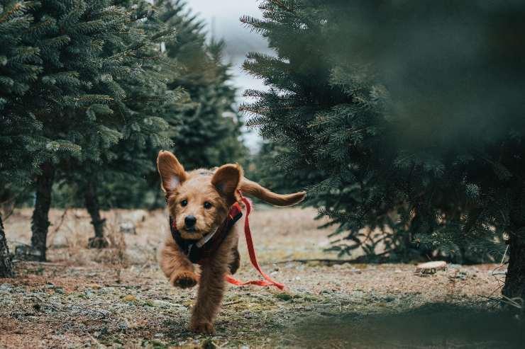 Attività fisica nel cane