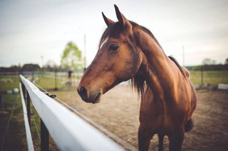 Il cavallo e le patologie