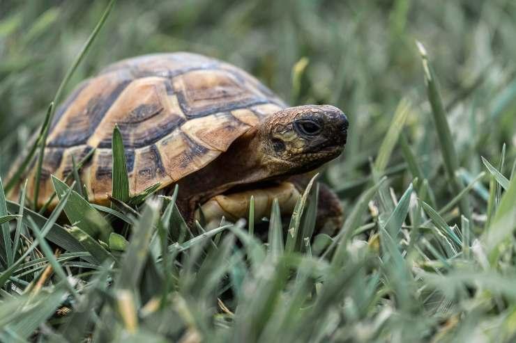 La nutrizione della tartaruga