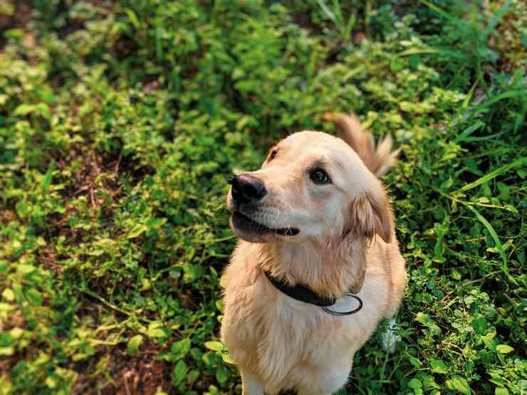 Il cane tra le piante