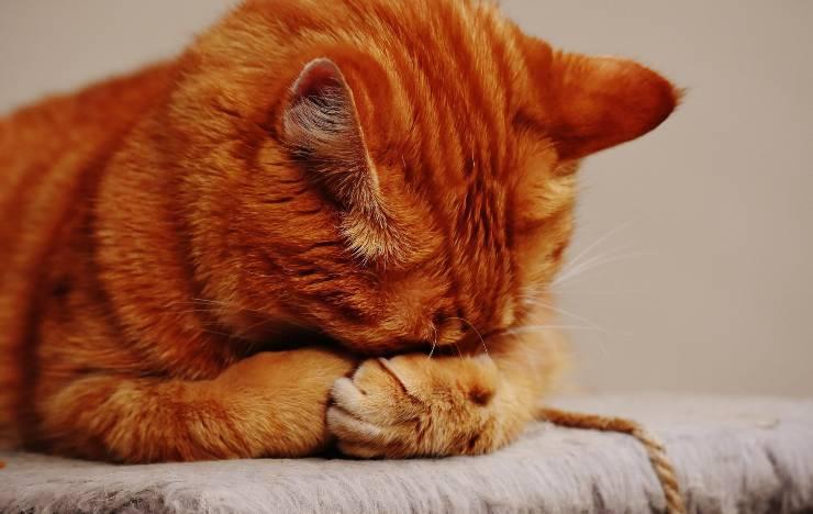 I pianti del gatto