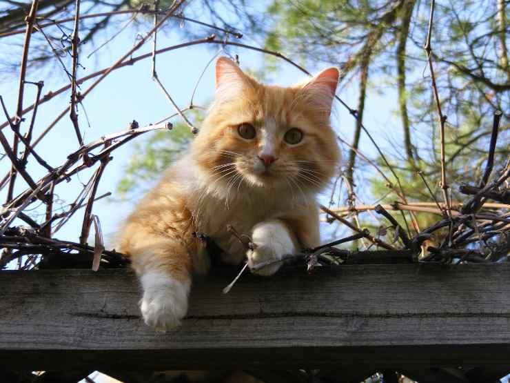 Il gatto e le sue caratteristiche