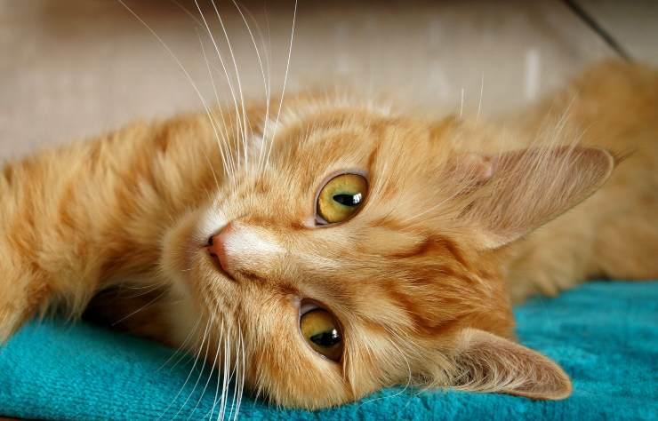 Il gatto e i disturbi