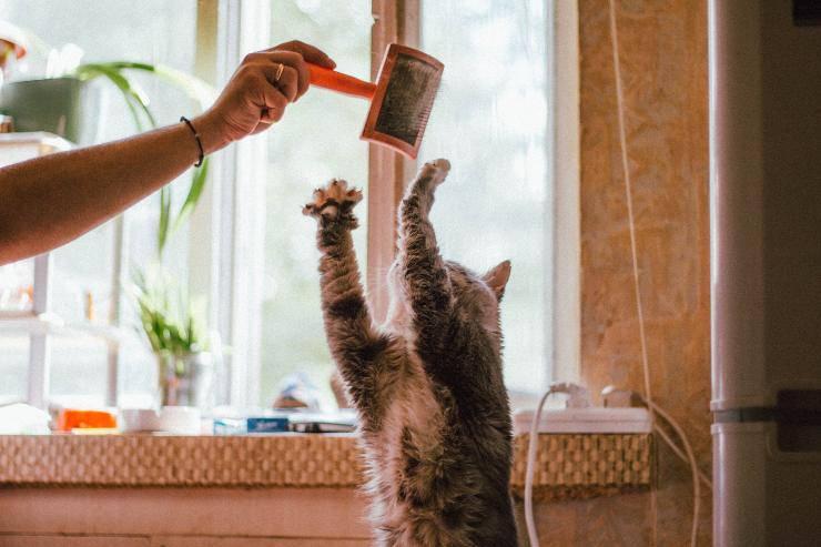 Gatto afferra oggetto con le unghie