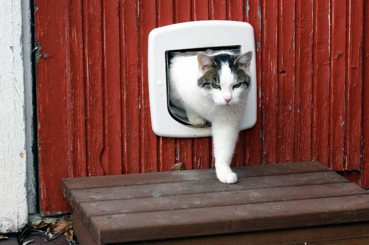 porte per gatti