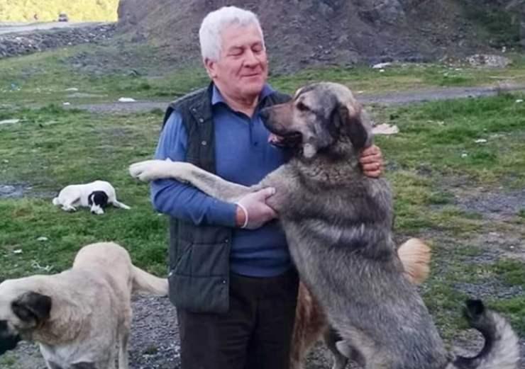 professore pensione laurea veterinario randagi