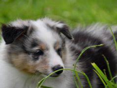 Il cane e le erbe aromatiche