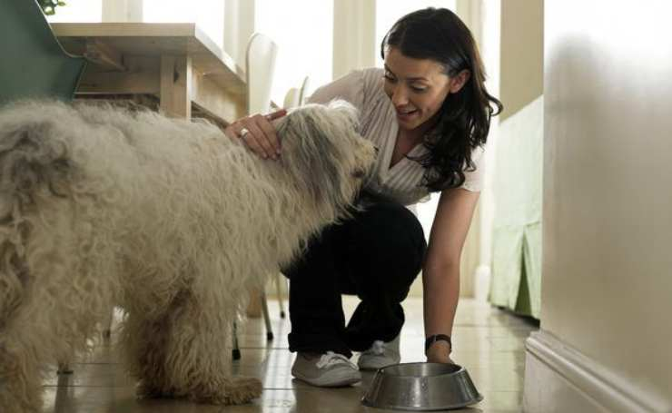 fegato al cane quando e come