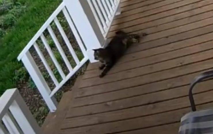 gattino rapito scappare aguzzini