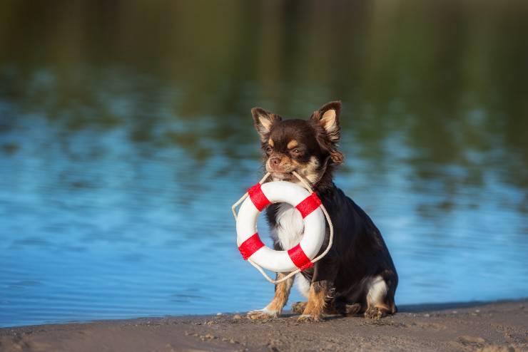 razze di cani da salvataggio