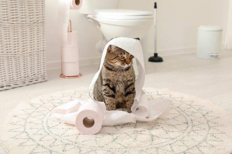 gatti dispettosi