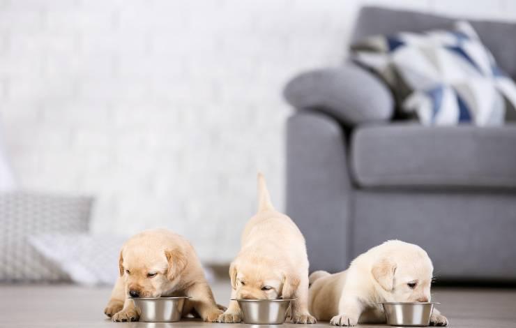 alimentazione cuccioli
