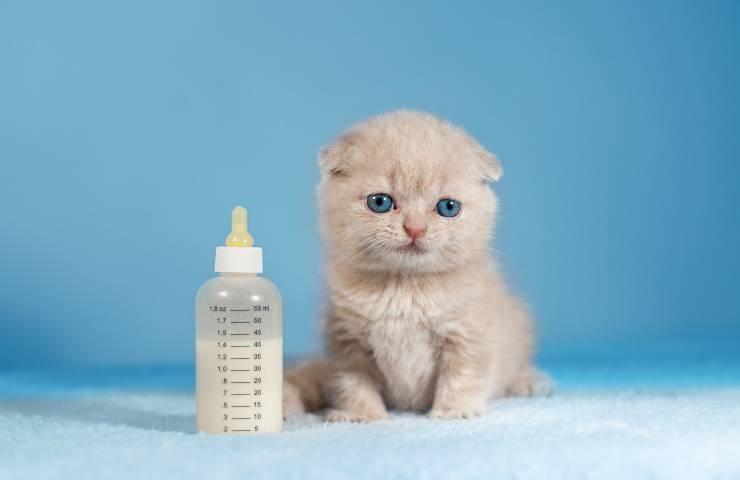 gattino e latte