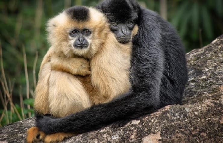 abbracci tra animali