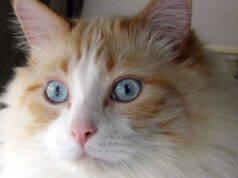 gatto abbandonato sei volte due anni