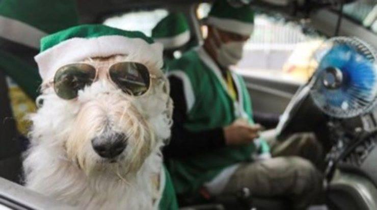 cane tassista Babbo Natale
