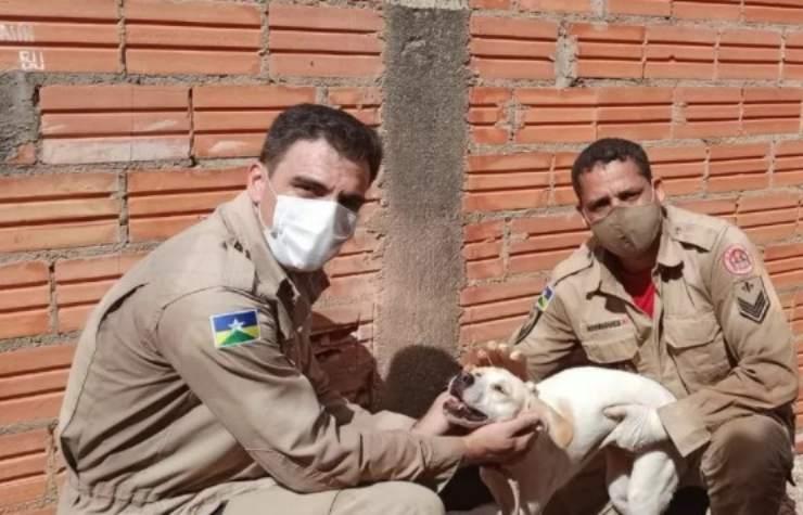 cane terrorizzato botti incastra due muri