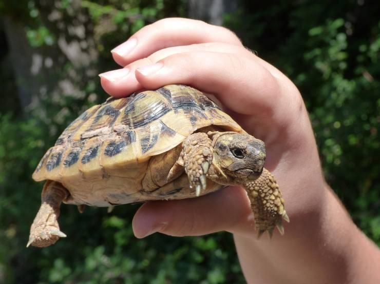 Tartaruga in mano a un bambino