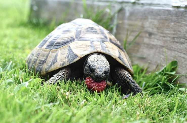 La nutrizione nella tartaruga