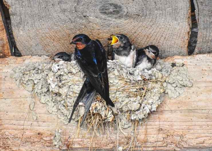 città salvare vita uccelli migratori
