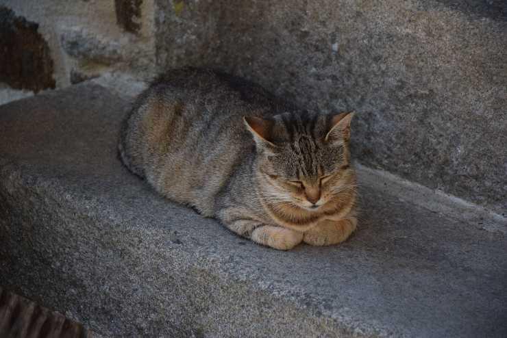 gatto polpetta