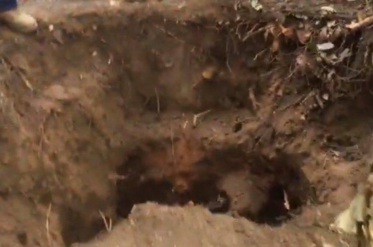 cane caduto tana vombato spacciato miracolo