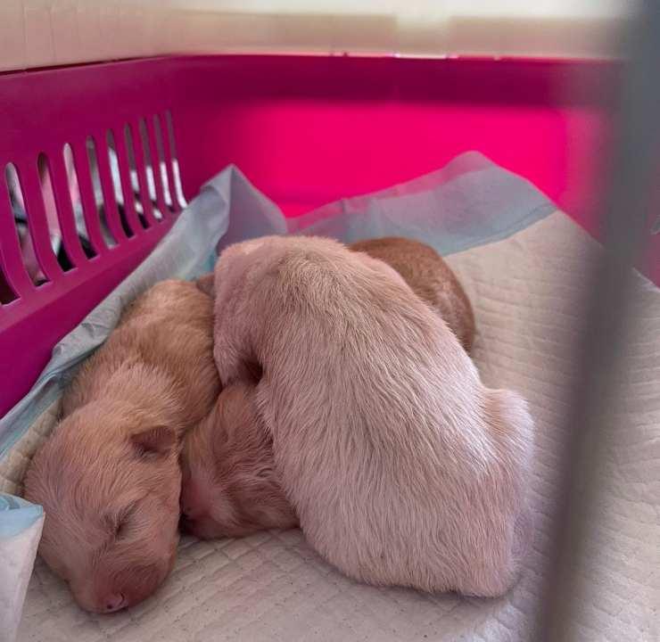 tre cuccioli neonati abbandonati busta foggia