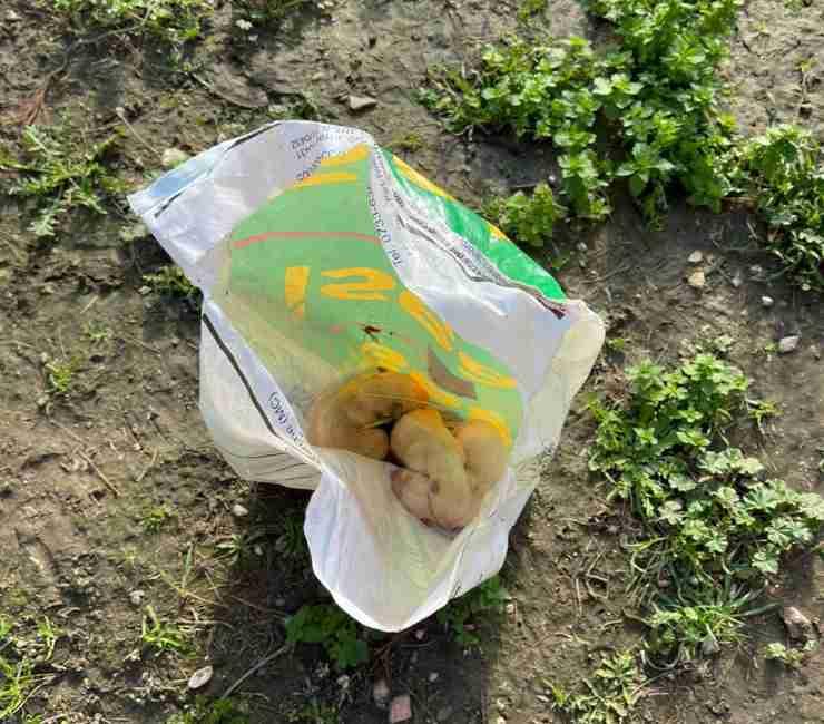 tre cagnolini neonati abbandonati sacchetto foggia