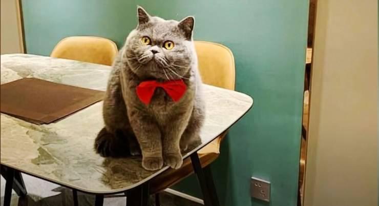 Fu Fu, le chat laissé seul dans la maison par le propriétaire (Capture d'écran vidéo)