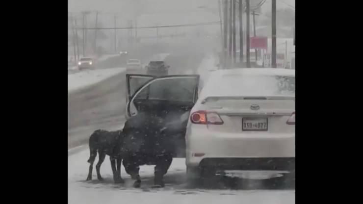 Chien de tempête de neige sur autoroute sauvé