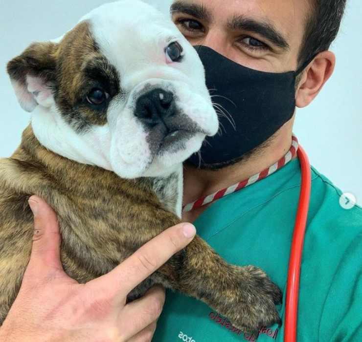 vidéo de nourriture pour chiens de vaccination vétérinaire