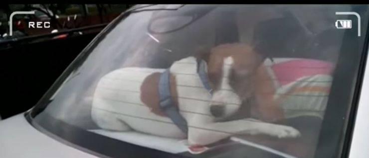 cane chiuso auto parcheggio parco divertimenti